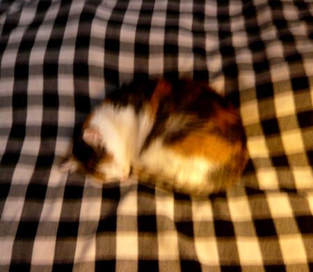 PMP42-cat